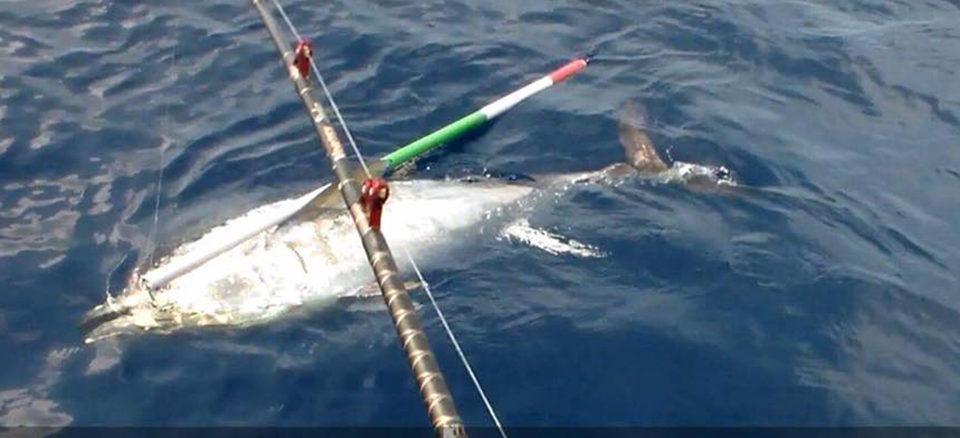 tonno catturato