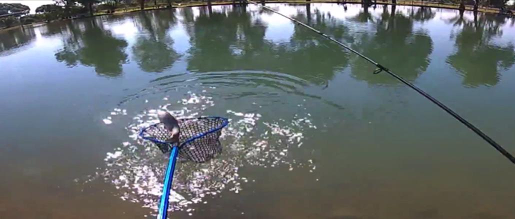trout area
