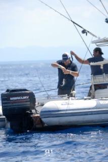 Azione di pesca con traina di superficie